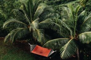 Stay: The Palmwood