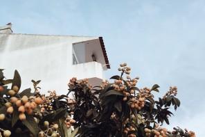 Stay: Fazenda Nova Country House